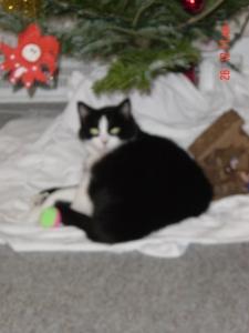 under the shiny Christmas tree